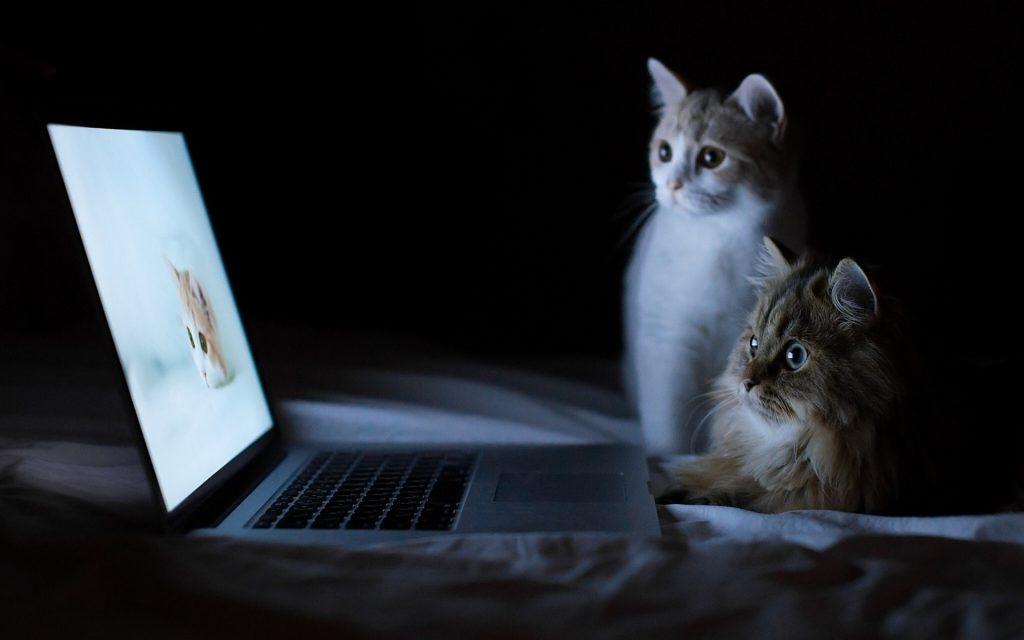 online watch movies