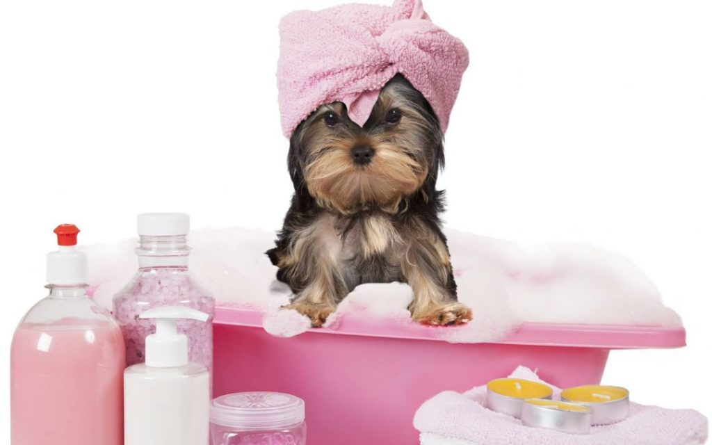 Pet Grooming