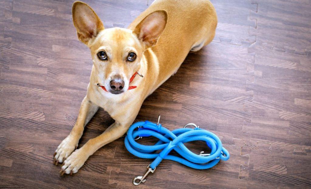 DIY dog rope leash